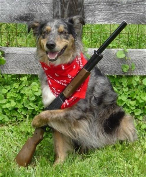 Funny Picture Of A Dog With A Shotgun