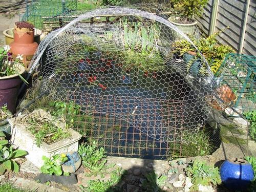 Great grandma 39 s hotchpotch mish mash for Fish pond nets