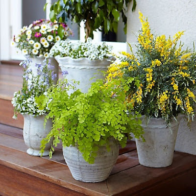 patio gardening ideas