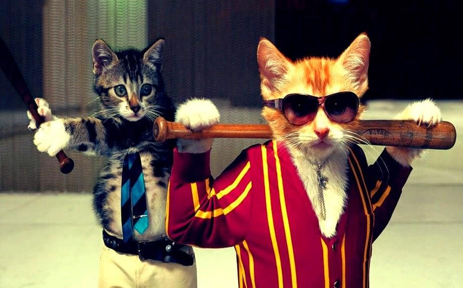 Gambar Kucing Lucu dan Unik