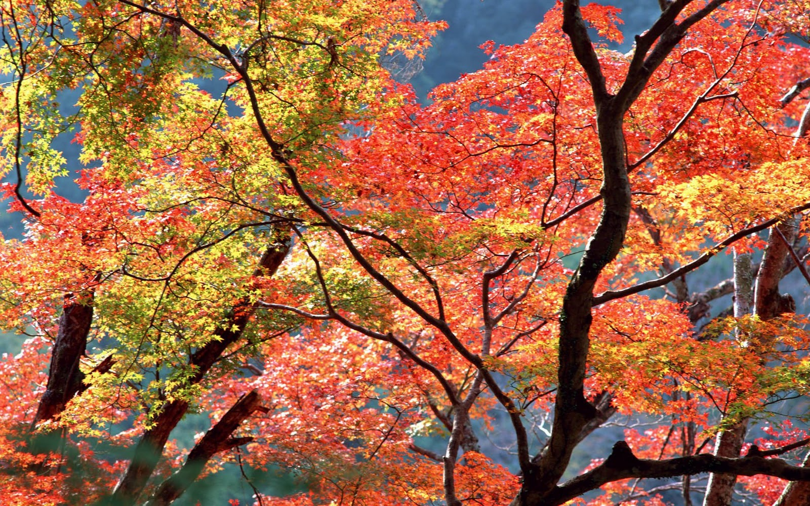 http://2.bp.blogspot.com/-yaA4bONuOmw/TwH27H_pWQI/AAAAAAAAbT4/H2nynRIdUo4/s1600/Autumn+Trees+HD+Wallpapers.jpg