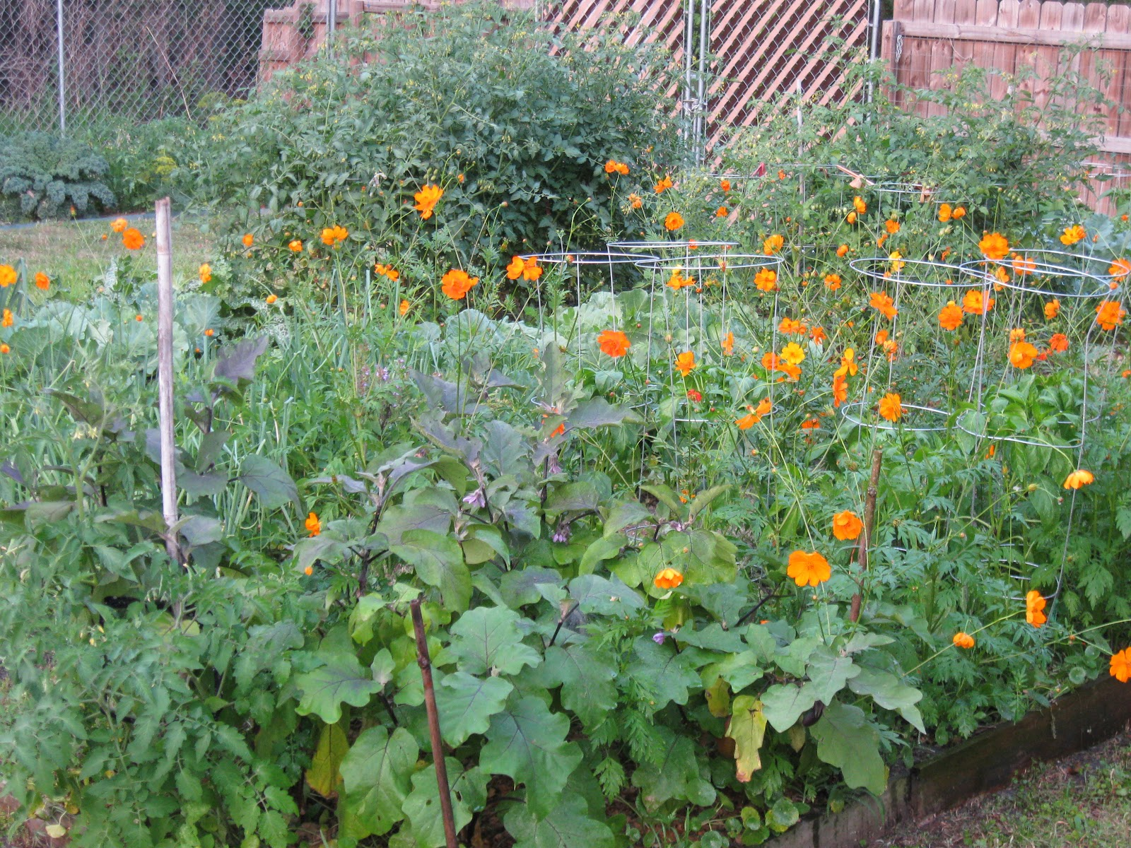Growing food in florida what can we plant in april in florida - Vegetable garden what to plant in april ...