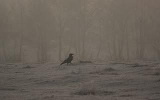 Corbul in ceata diminetii, The crow