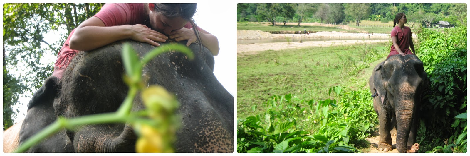 elephant-chiang-mai-thailand