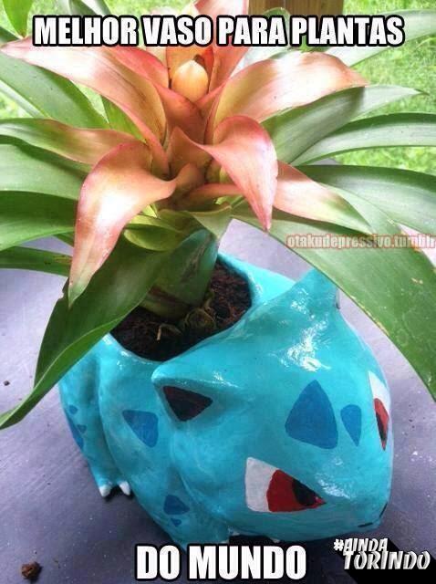 Melhor vaso para plantas do mundo!