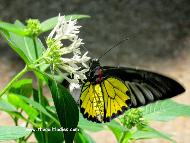 White Flower and Black Butterfly 1 by Beth Ann Strub