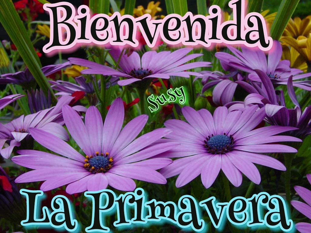 bienvenida primavera flores rosas hermoso dia buenos dias
