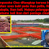 Cina Bagi Ikan Patin Dan Talapia Makan Usus Babi, Kemudian Jual Pada Melayu...