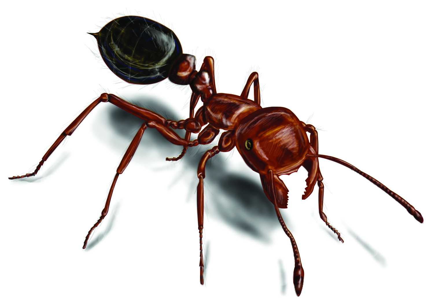 LATELIFE MUSINGS...: BEDROOM ANTS
