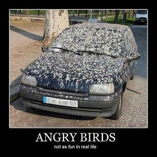 Carro sujo de cocô de pássaros - lindo animal engraçado 02