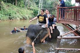 Kuala Gandah Elephant Sanctuary Adventure Tours