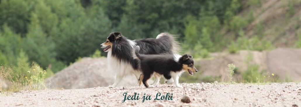 Sheltit Jedi ja Loki