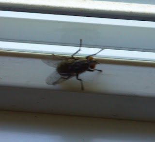 a horse fly on a window ledge