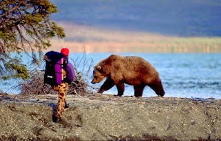 hiking bear