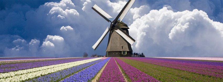 Hollanda lale tarlasındaki yeldeğirmeni kapak resimleri