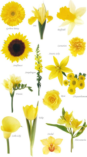 yellow flowers, gula blommor, blomster palett gult