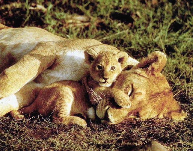 Cachorro Leon con su Mamá