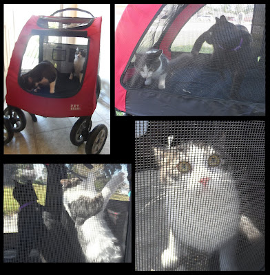 Anakin & George in the Pet Stroller