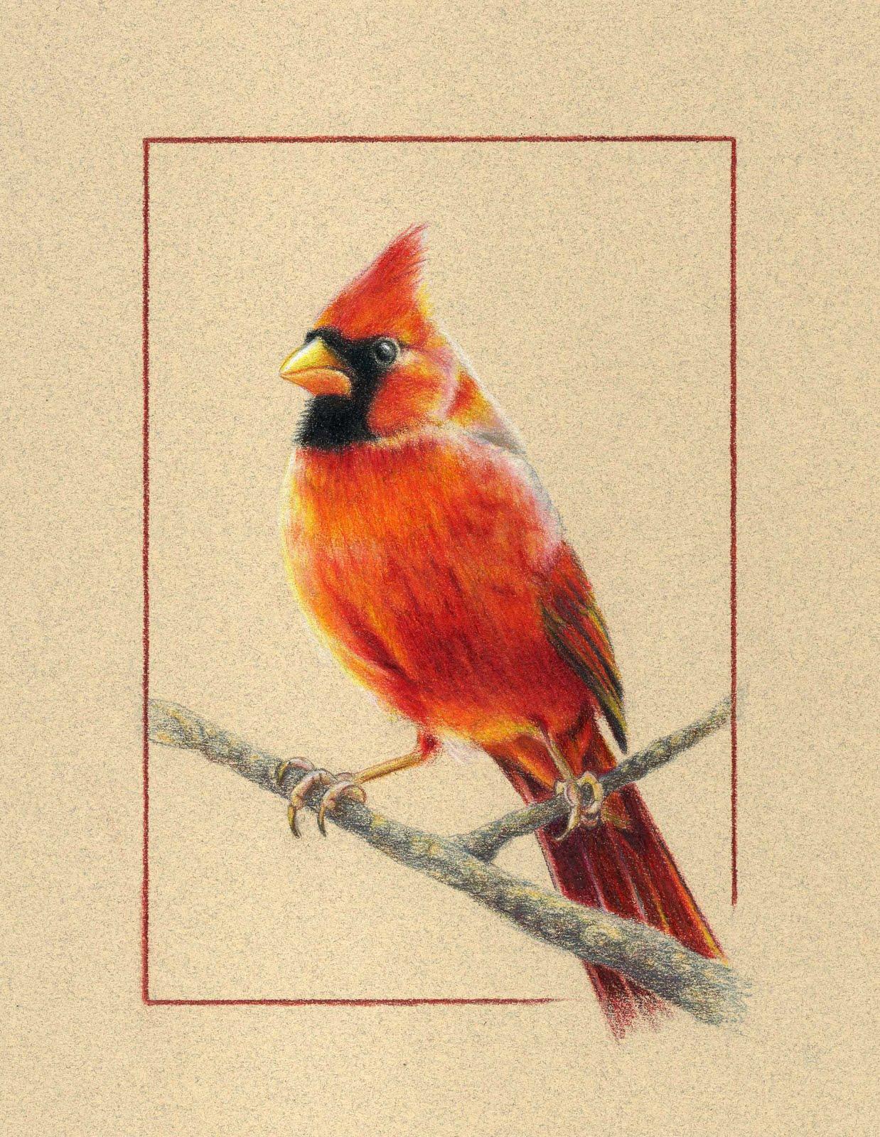 cardinal bird flying drawings