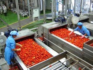Produção de extrato de tomate
