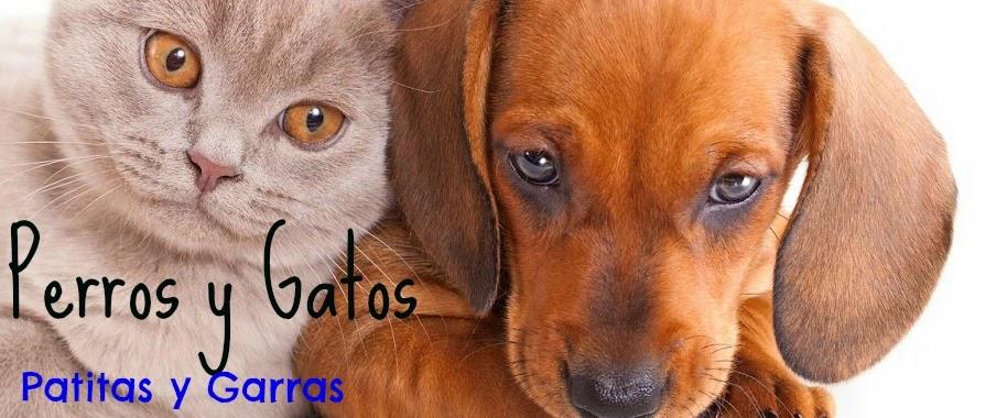 Perrosygatos-Patitas  y garras