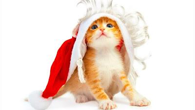 http://2.bp.blogspot.com/-ycm8FlCGUKo/Trp1_d5ZSmI/AAAAAAAAAwY/O6EBKAWR548/s1600/merry+Christmas+Greeting+Cards+%25282%2529.jpg