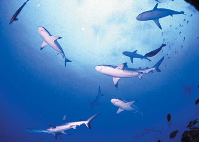 Foto de Tiburones