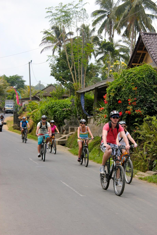 Image Result For Bali Wildlife Adventuresa