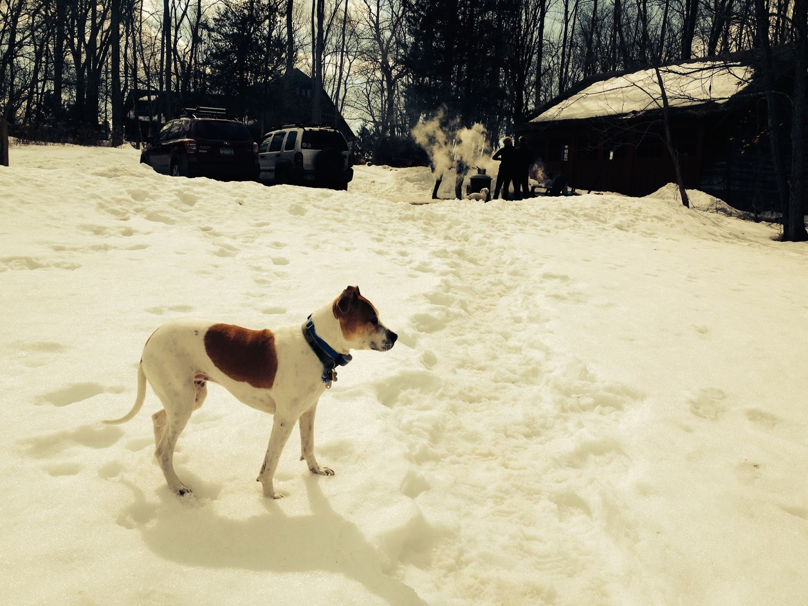 dog in snow: simplelivingeating.com