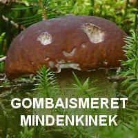 GOMBAFUTAM