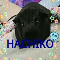 R.I.P hachiko
