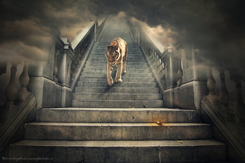12-Coming-Down-Even-Liu-Surreal-Photo-Manipulations-and-the-Lantern-www-designstack-co