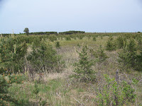 Kitland&#39;s Warbler Habitat