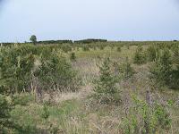 Kitland's Warbler Habitat