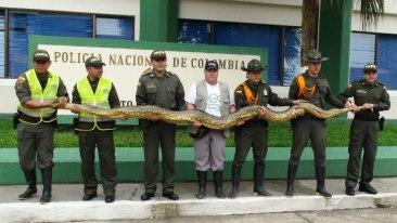 anaconda capturada en leticia amazonas