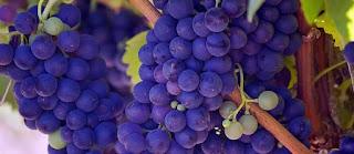Manfaat Buah Anggur Bagi Kesehatan