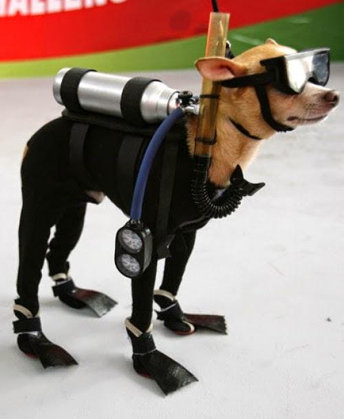 disfraz de buzo para perro