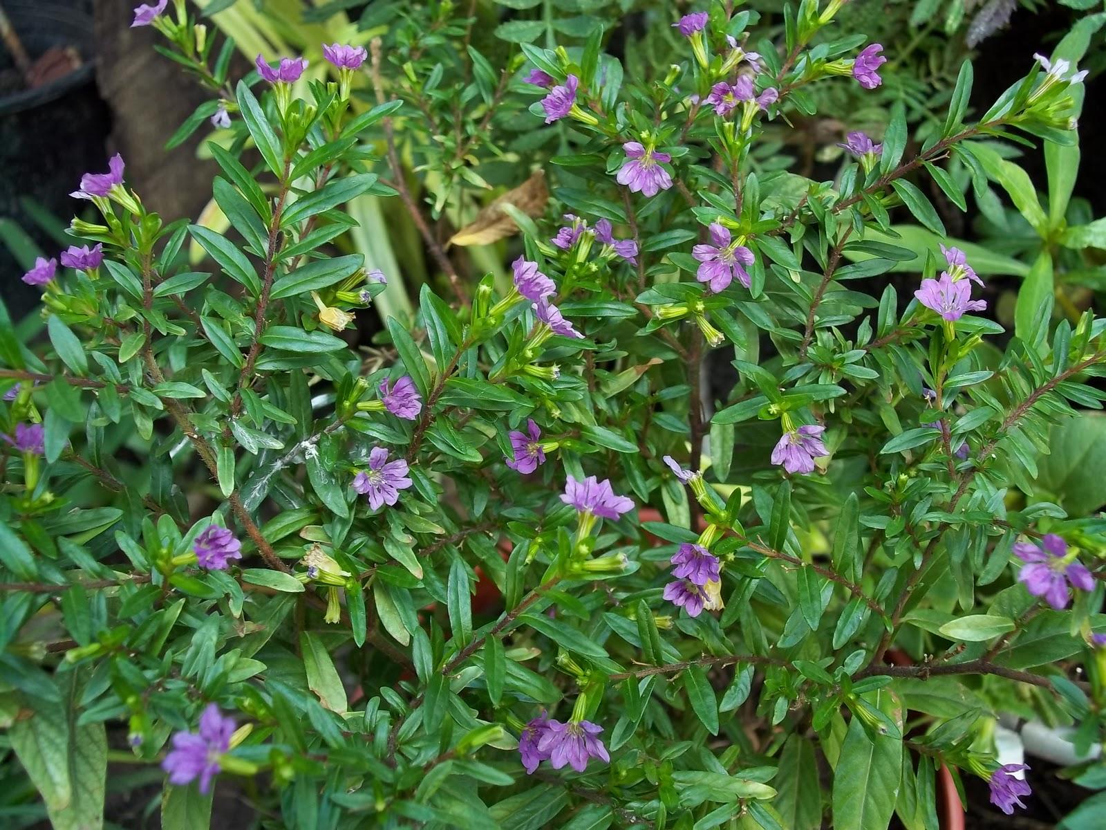Plantas con flores rosas related keywords plantas con - Jardines con rosas ...
