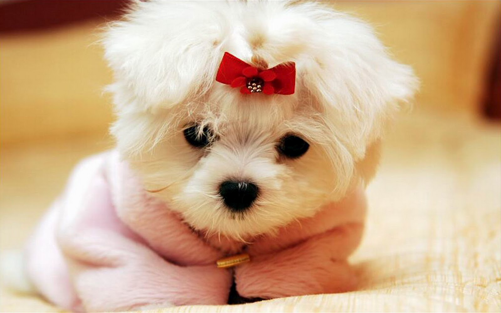 http://2.bp.blogspot.com/-ydxdFHN0lIo/UAv-MWz-KGI/AAAAAAAAK6o/PNORgK2F6fc/s1600/Puppy+13.jpg
