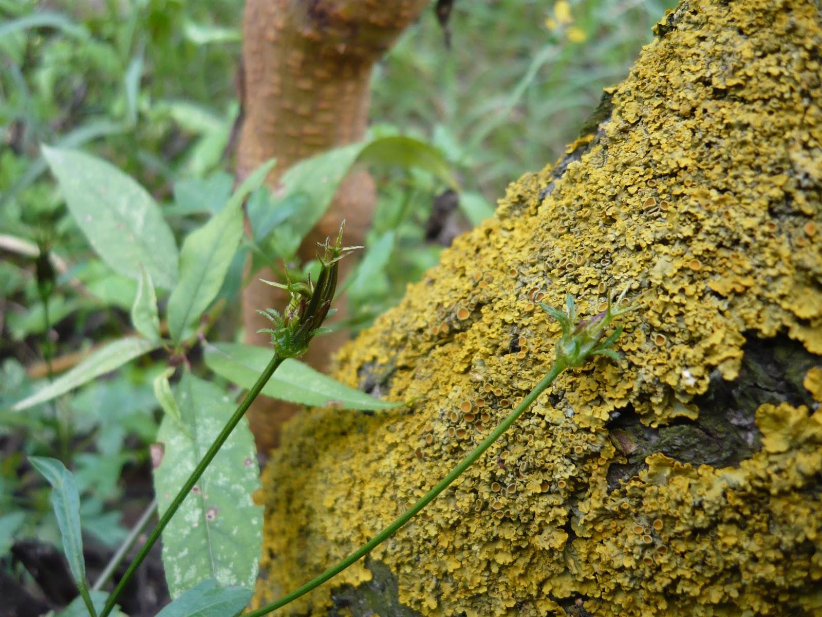 http://2.bp.blogspot.com/-ye5-GeM8edA/UYnkeeOoE7I/AAAAAAAAAKQ/GwxY-7l5UbI/s1600/Stem+covered+with+yellow+moss.jpg