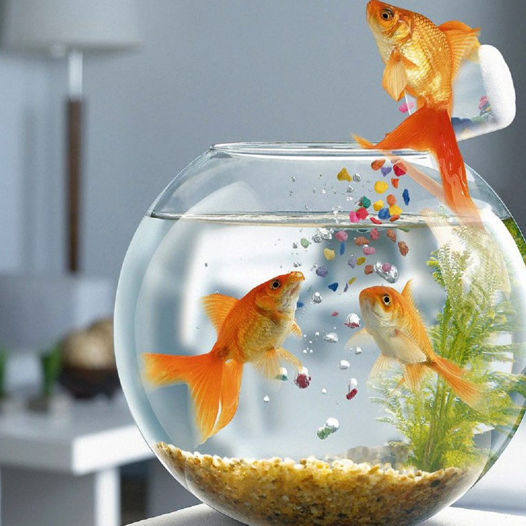 And then we all had tea tales from the tank for Fish bowl fish
