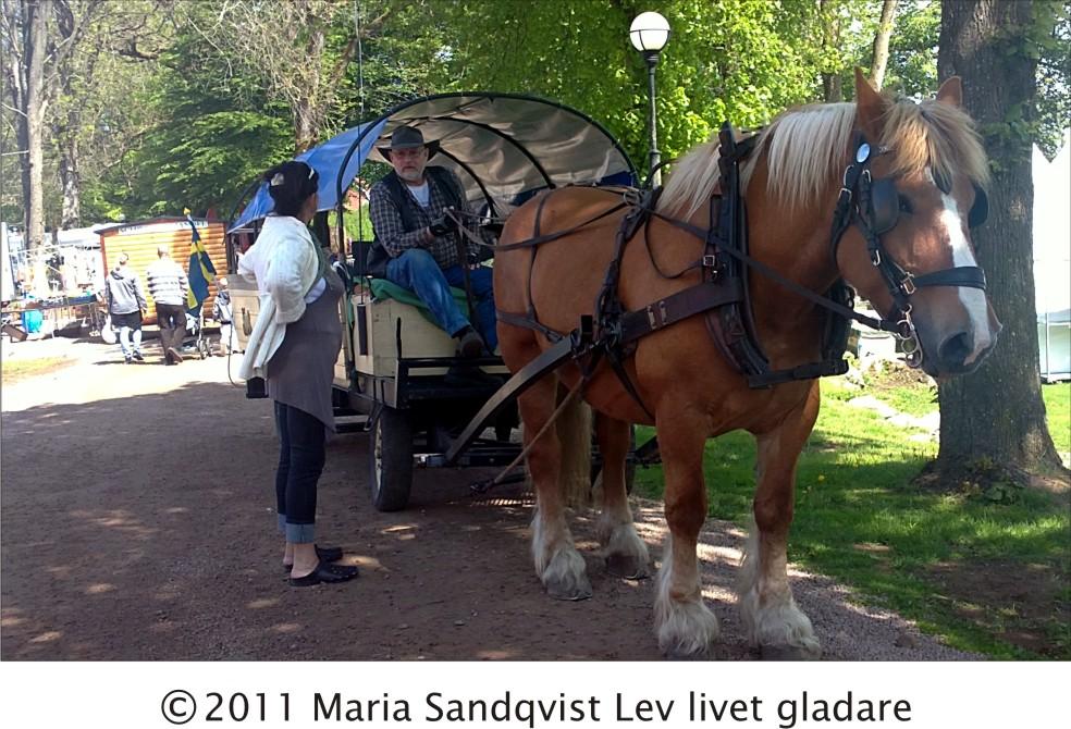 Trädgård Wapnö : Lev livet gladare wapnö trädgård amp bostadsmässa