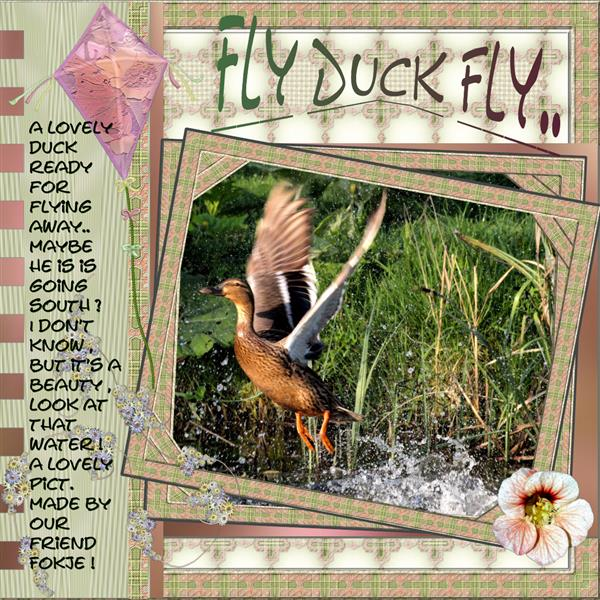 Fly Duck fly