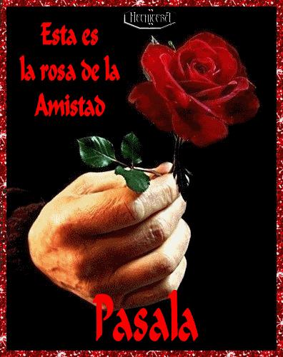 rosa de la Amistad