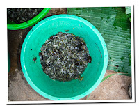 Insect food in Laos