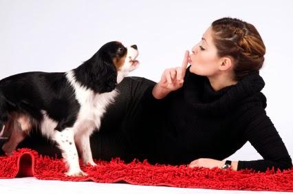 ¿Mala conducta en tu perro?