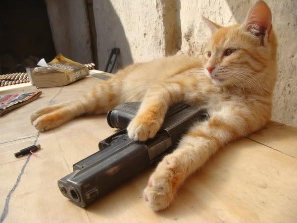 cat+with+gun.jpg