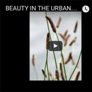 2015, BEAUTY IN THE URBAN WILDERNESS