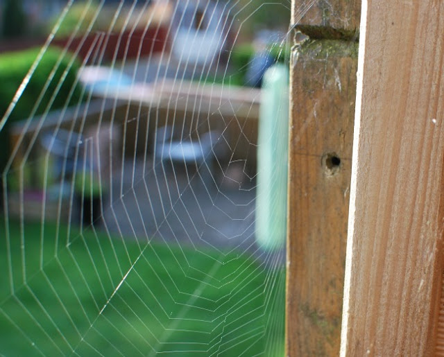 spiders web on fence