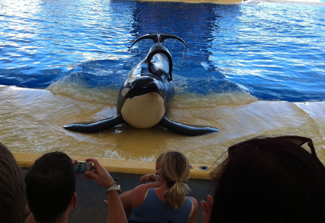 Blackfish Killer Whales doing unnatural things in captivity